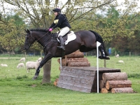 Showjumper / Working Hunter
