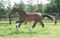 Two year old filly by Floriscount